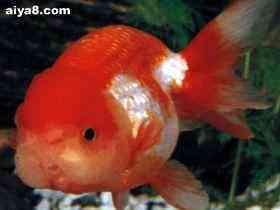 金鱼生病重在消毒