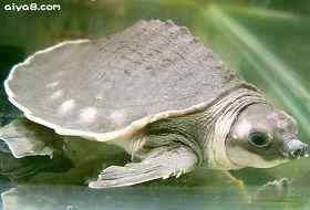 坑道式孵化巴西龟苗