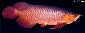 17种龙鱼病症的防治方法