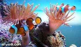 鱼类常见疾病与治疗
