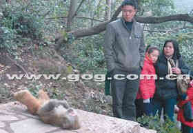 贵州两只猕猴先后离奇死于同一地点