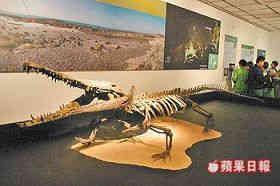 台湾发现5米长史前巨鳄化石 鉴定为新物种