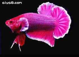 鱼病慎用盐和药品
