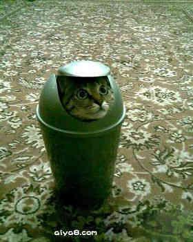 小猫的搞怪图片(1)
