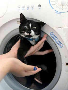 英国猫咪被洗衣机狂卷 奇迹幸存