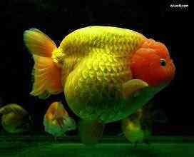 养鱼先养水
