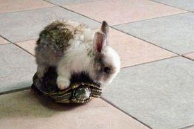我的坐骑,快走,笨乌龟!!