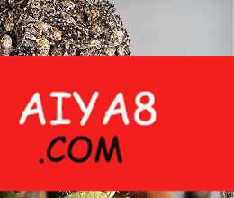 狼蛛 最丑陋蜘蛛