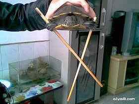 小乌龟表演绝技