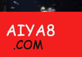 哥斯达黎加总统下令征地保护濒临灭绝海龟