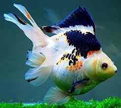 关于金鱼和金鱼池