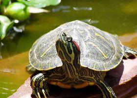 申领国家重点保护野生动物驯养繁殖许可证