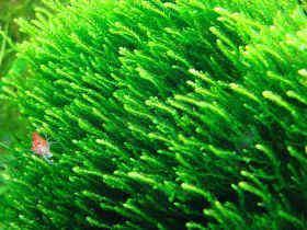 如何预防水草缸中的青苔