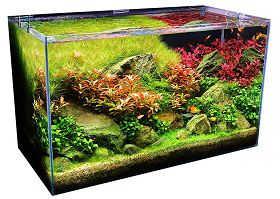 水族箱的有害及无害藻类去除