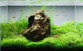 水草的生长形态